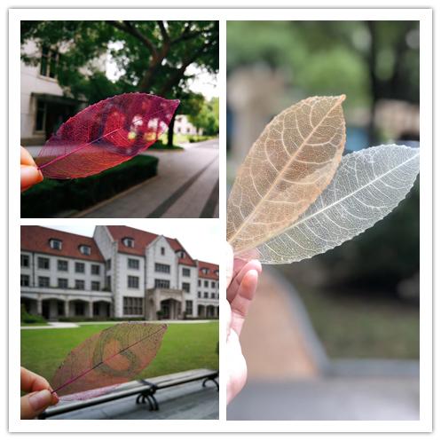 [长宁]上海市第三初中初级中学:用心用情对教扶贫攻坚女子作文图片