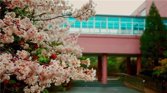 [浦东]杨思高级中学:植根母校植树传情高中英语诗图片